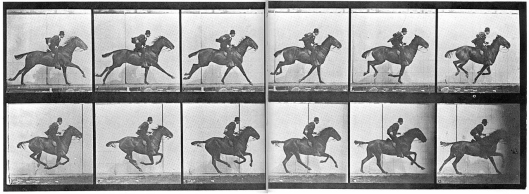 1280px-Muybridge_horse_gallop